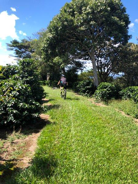 Rouler à travers les plantations de café locales.