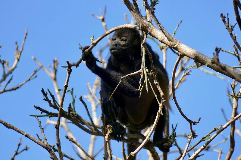 Another backyard monkey.