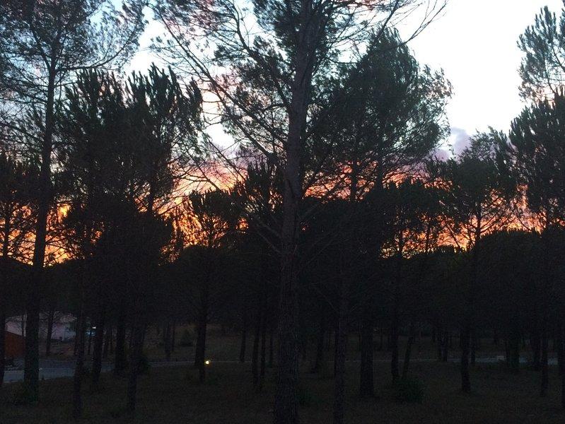 Sonnenuntergang vom Garten