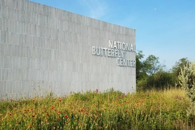 Nazionale-farfalla-centro-Texas