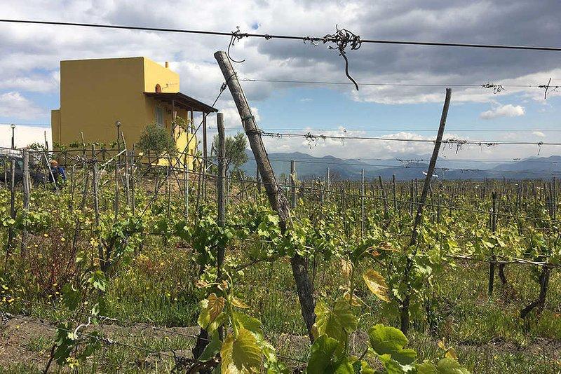 Vesuvio INN - Rifugio Wine Lover, vacation rental in Trecase