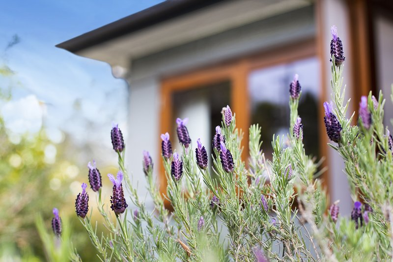 Denmark Cottage, vacation rental in Jenolan Caves