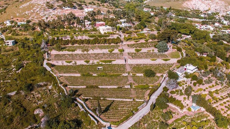 Montofoli Vineyard