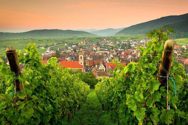 Riquewihr / les vignes le soir