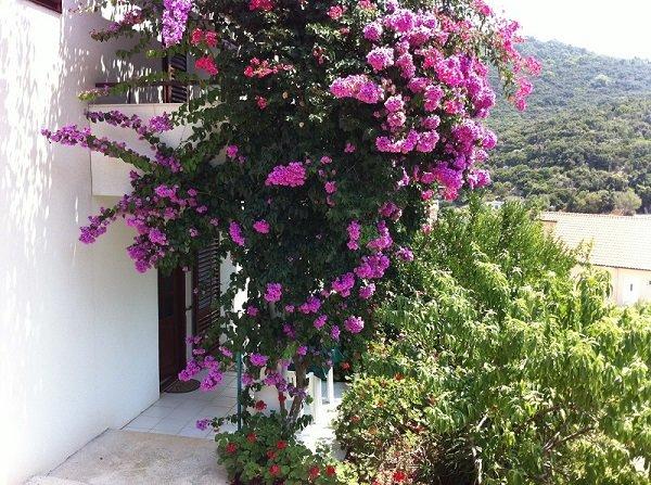 Studio apartment 5 - Apartments Paradise, aluguéis de temporada em Ubli