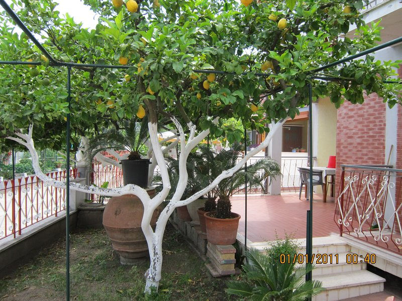 Appartamento indipendente vicino al mare, holiday rental in Colonia Elena