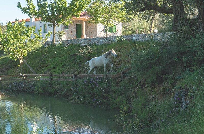 Villa Elia, holiday rental in Agios Vasileios Municipality