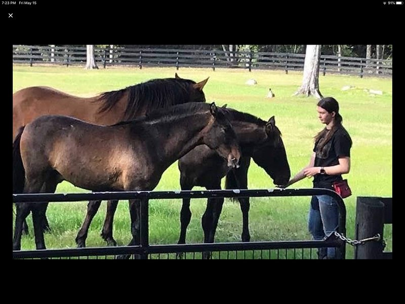 Stay & Ride DiamondOaksFarm Ocala Florida Farmstay Vacation Rentals. Horses!, casa vacanza a Belleview