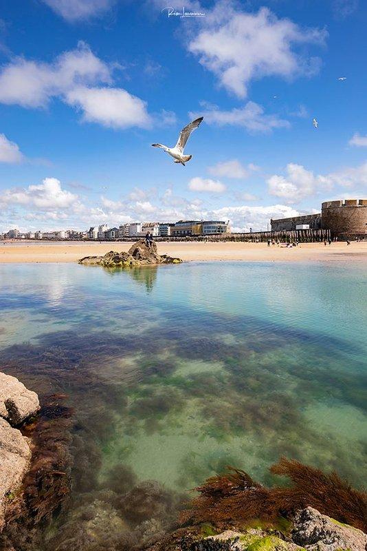 Seagull over Saint-Malo
