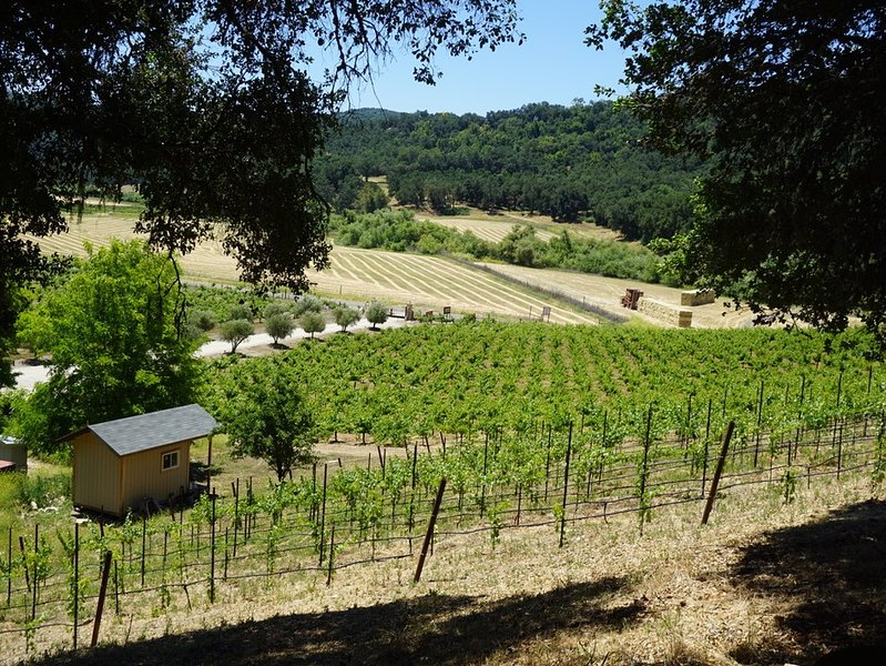 Tentrr Signature Site - Vineyard Glamping, holiday rental in Templeton