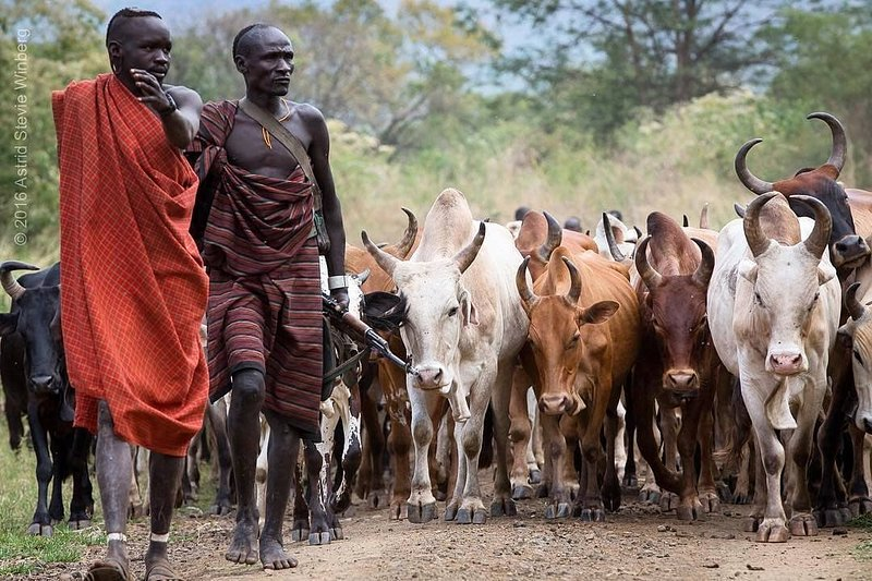 Omo valley Tribes photography tours, holiday rental in Jinka