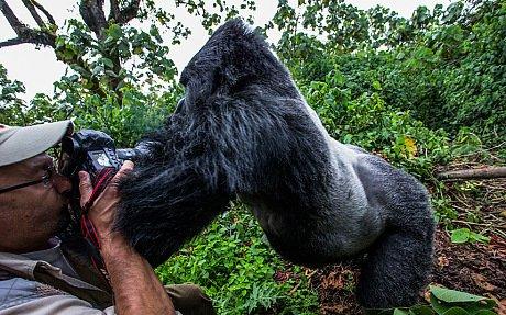 Nkuringo Homestay, location de vacances à Mgahinga Gorilla National Park