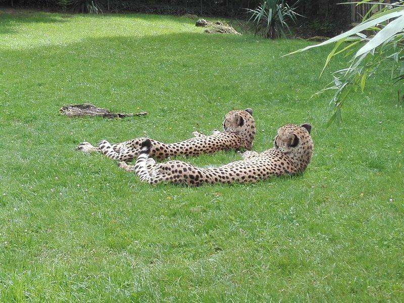 Parc sauvage du zoo de la Flèche à 25 minutes du gite