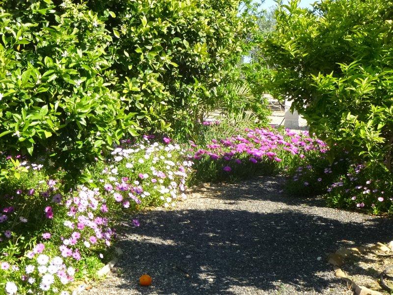 Beautiful garden at Finca Arboleda