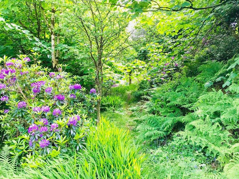 Back Garden- Woodland