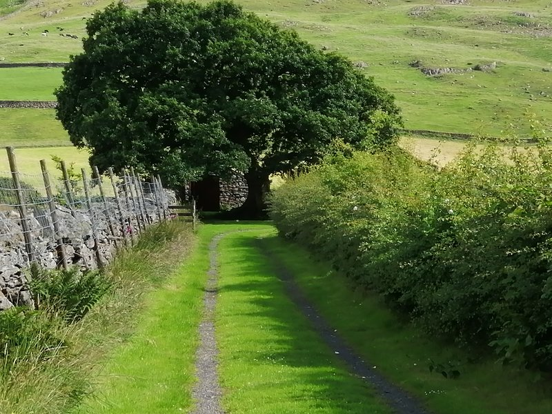 You can just see your bothy past the oak tree far down a track.
