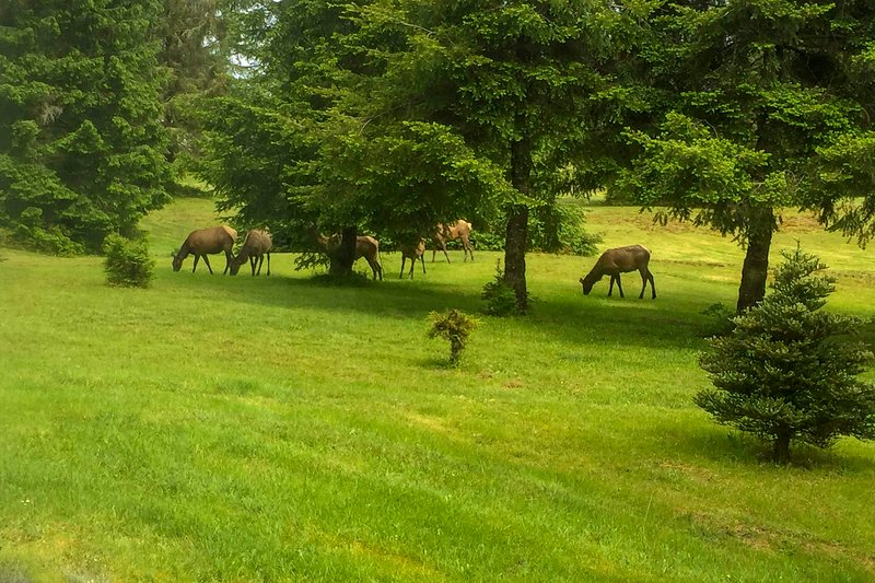 Keep an eye out for local wildlife grazing in the yard!
