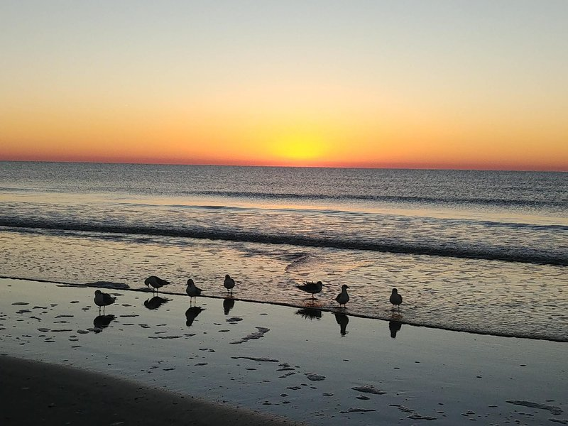 Our locals at sunrise!