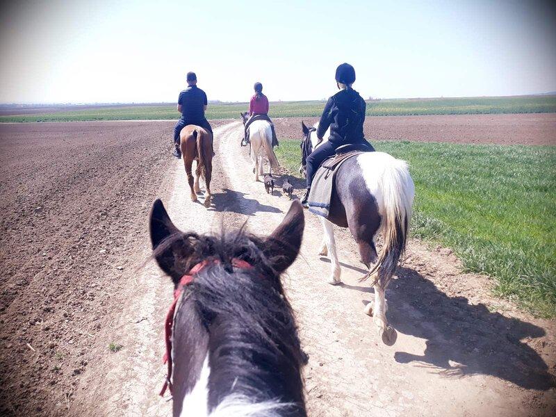 Salaš kod Dragčeta Country Farmhouse - Horseback Riding - Bed, Lunch, Breakfast, holiday rental in Sabac