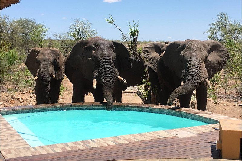 Bushvilla Umoja Kruger-wildlife without fences. On an old waterroute, the elephants sometimes pass