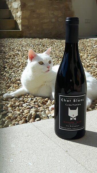 Le Chat Blanc (Bonbon) et le Chat Blanc