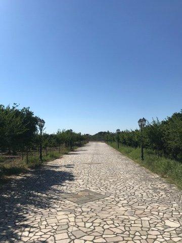 Tenuta agrumi del Salento, holiday rental in Novoli