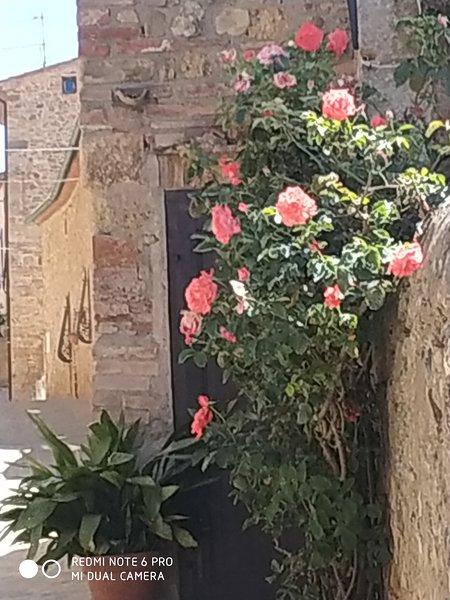 Casa Vacanze 'iL Roso'. Casa singola con giardino privato in relax, alquiler vacacional en Radicondoli