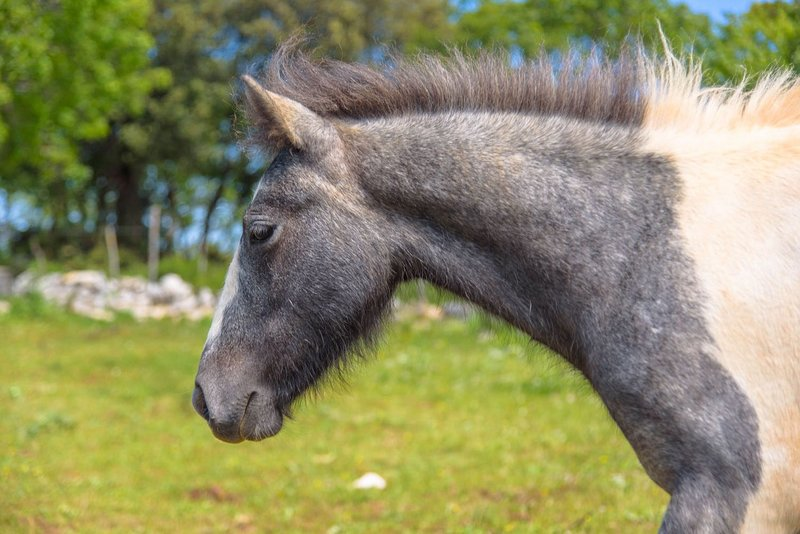 Trekking tra i cavalli (pernottamento+cena tipica+esperienza), location de vacances à San Severo