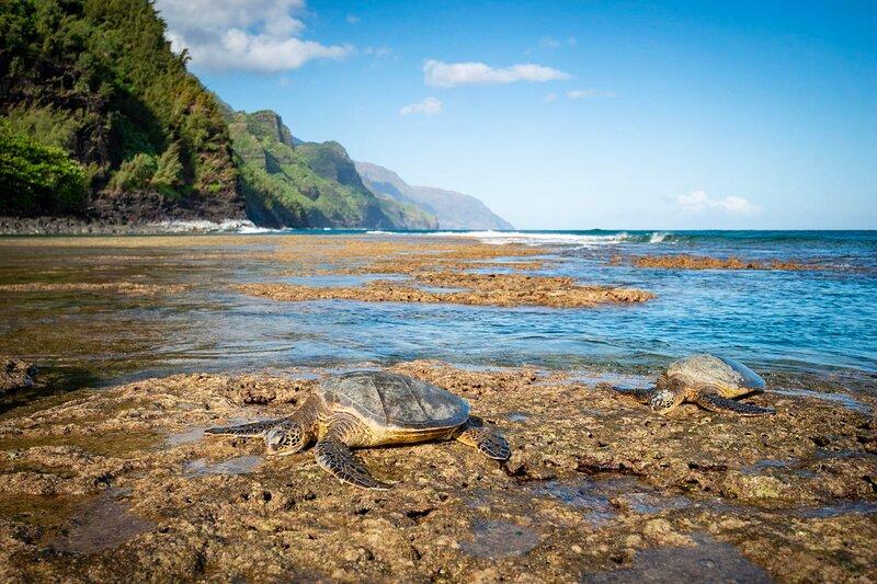 Kauai Calls!