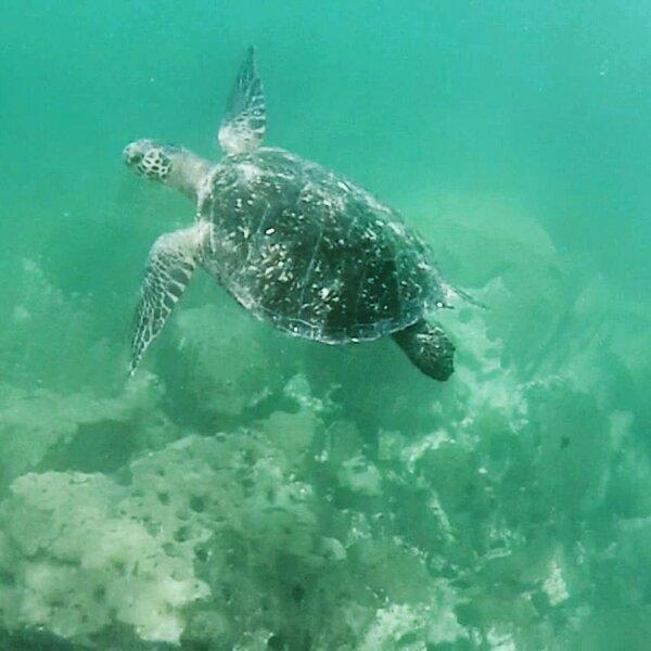 Vida marinha ativa