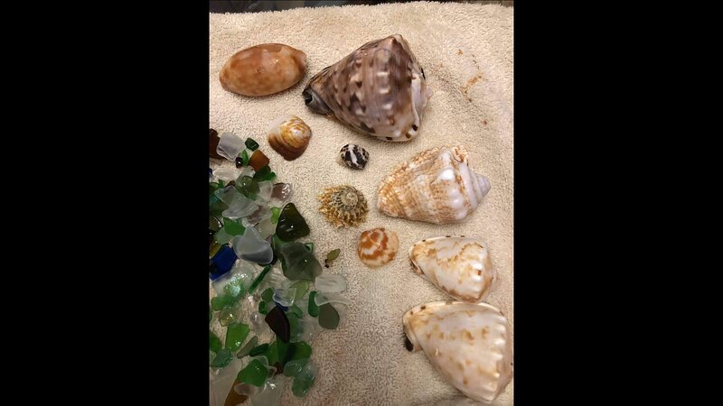 join the adventures to find Shells and Seaglass treasures
