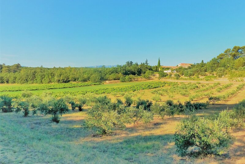 View of Domaine de Conillieres from the vines and the olive trees