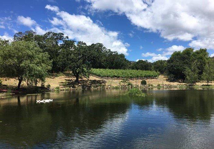 Vineyard meets pond