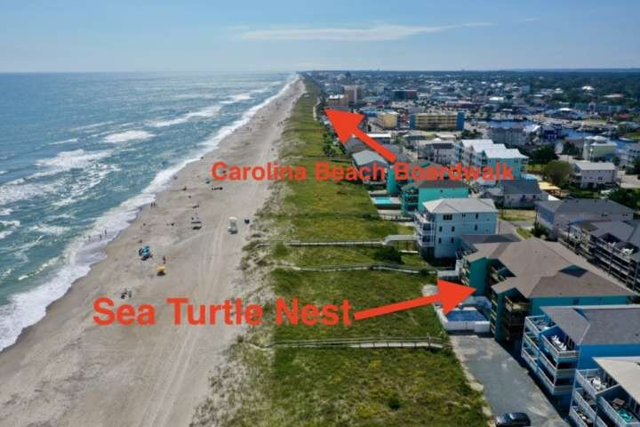 Beachfront, pool, private community dock and close to downtown CB, Sea Turtle Nest has it all