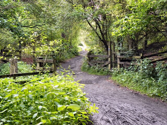 Easy access to many trails and hikes including this famous Outwood Trail