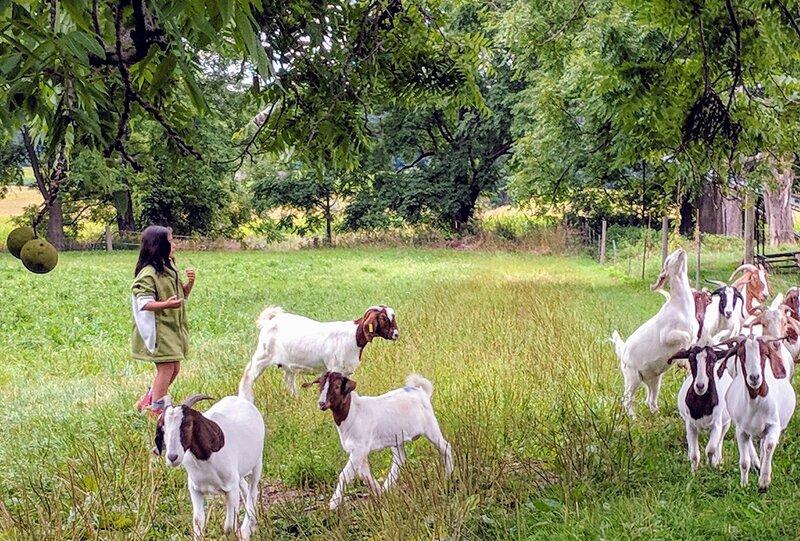 And a few goats!