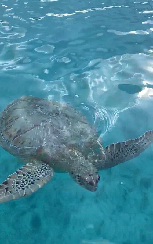 Hoopers bay friendly Turtles