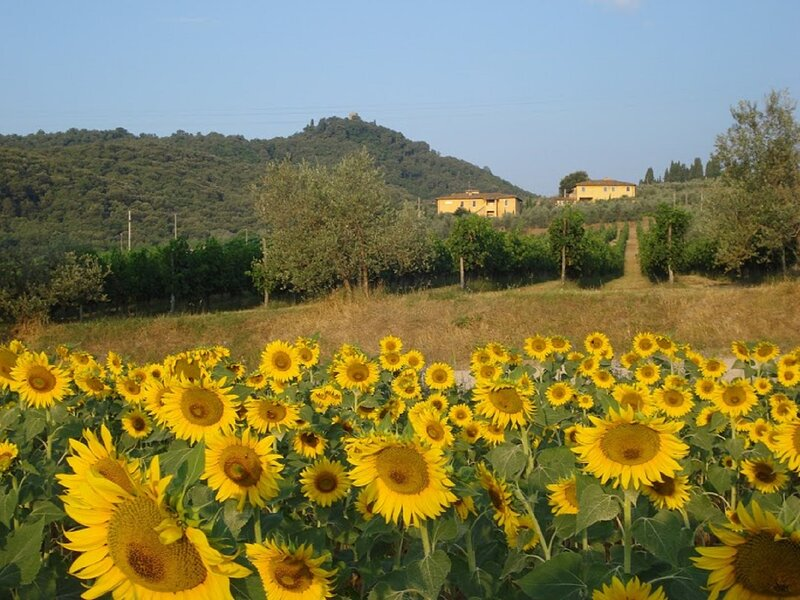 FARMHOUSE INSIDE 80 ACRES OF GREEN OLIVE GROVES, vacation rental in Mercatale Valdarno