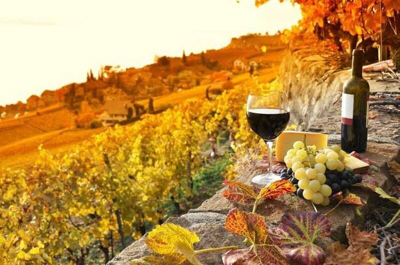 SURROUNDED BY THE VINEYARDS THE CHIANTI COUNTRYSIDE, alquiler vacacional en Sieci