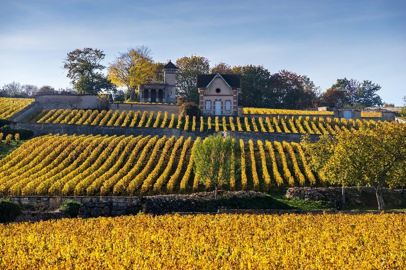 A DREAM FAIRY TALE CHATEAU IN THE FAMED VINEYARDS OF MEURSAULT BURGUNDY, vacation rental in Chassagne-Montrachet