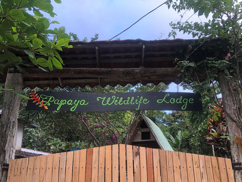 Papaya Wildlife Lodge, holiday rental in Cahuita