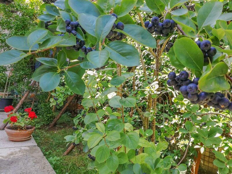 Forlani, holiday rental in Vodnjan
