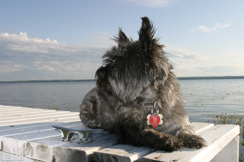 A pic of our beloved Cairn terrier, Daisy. This photo was taken at Johnsonia Beach in 2009.
