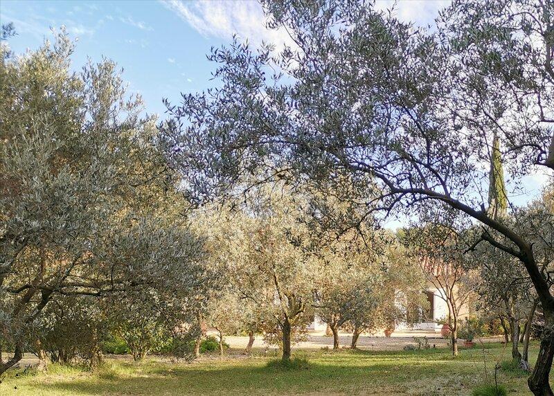 Mas des Oursons entre Alpilles et Camargue, holiday rental in Raphele-les-Arles