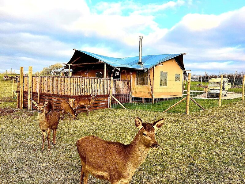 Luxury Safari Lodge surrounded by deer!! 'Roe', holiday rental in Crediton