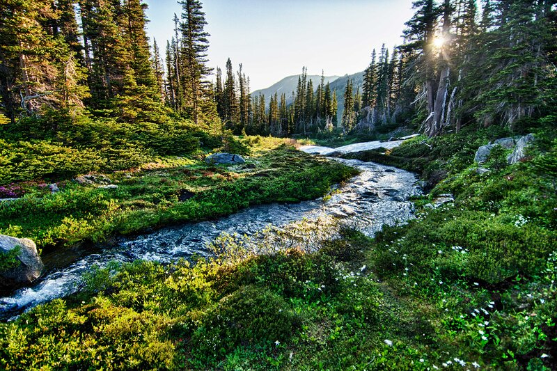 Local Attraction | Olympic National Park