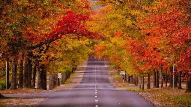 Wotama Honour Avenue Mount Macedon, location de vacances à Woodend