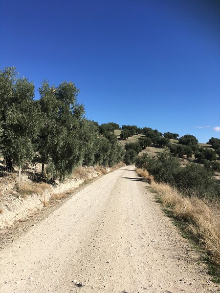A Walk from Casa Limon