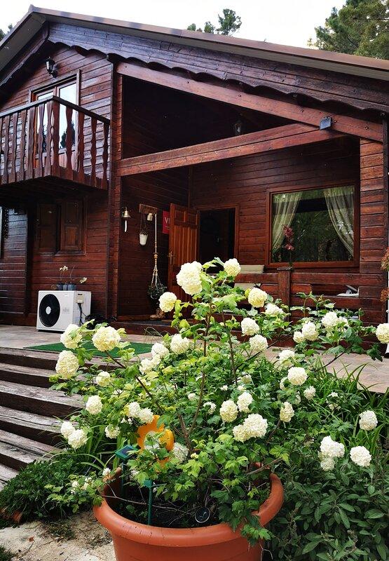 Flores y frente de la casa.