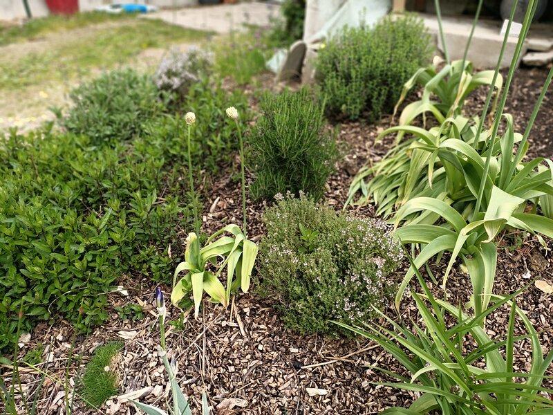Les herbes aromatiques: thym, sariette, romarin, sauge, ciboulette, menthe, mélisse..